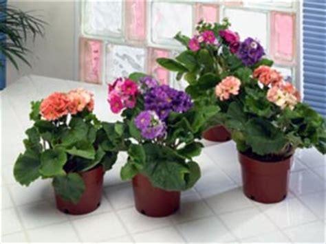 best indoor flowering plants apartment garden top 4 indoor flower plants boldsky com