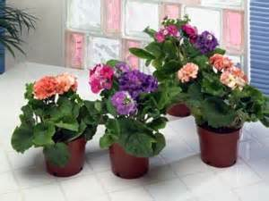 Indoor Flower Plants by Apartment Garden Top 4 Indoor Flower Plants Boldsky Com