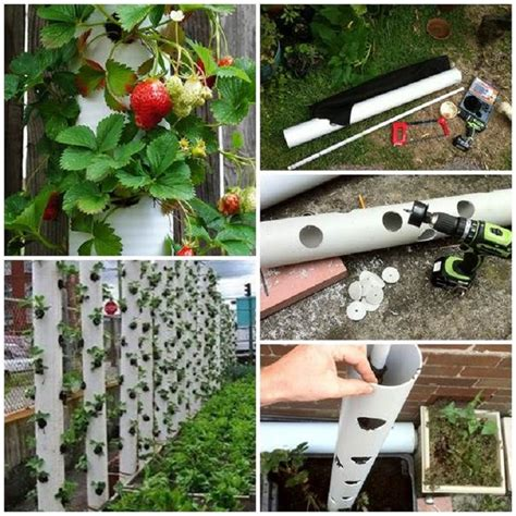 Vertical Pvc Garden Top 10 Cool Vertical Gardening Ideas Top Inspired