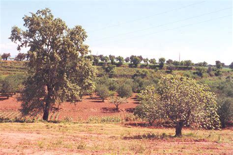 lade agro nou impuls a l espai agroforestal de llevant sentmenat
