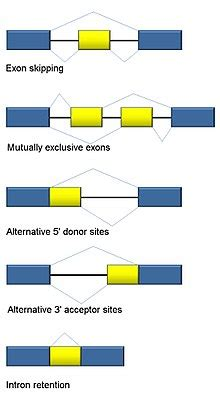 types of splice alternative splicing