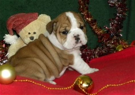 free puppies dothan al pets dothan al free classified ads