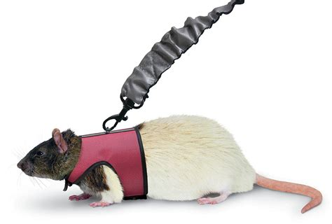 harness and leash small rabbit pet rat or ferret comfort harness and stretchy leash new ebay