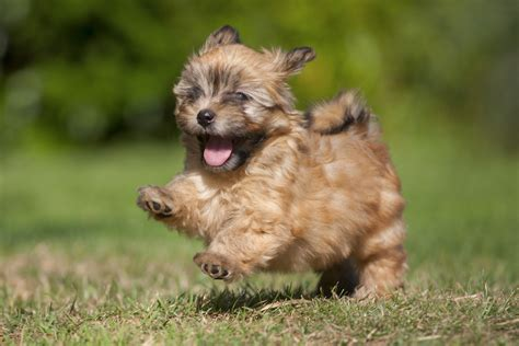 and small puppies 20 small breeds that are beyond