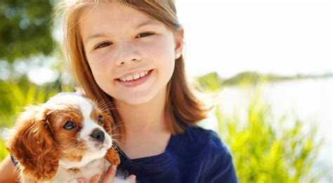 how much does a cost per year how much does your pet cost you per year dogs cats more geico