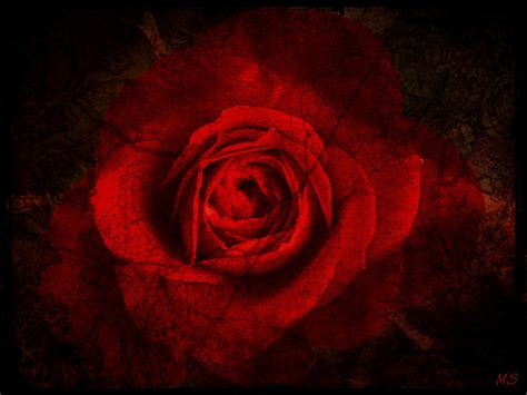 gothic roses wallpaper wallpapersafari