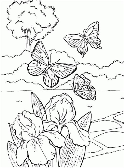 coloring pages of flowers and butterflies coloring pages of butterflies and flowers az coloring pages