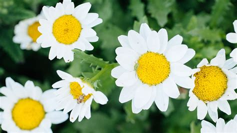 list of fall flowers fall flowers fall blooming flowers and what to plant in fall