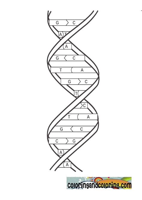 free coloring pages of double helix worksheet