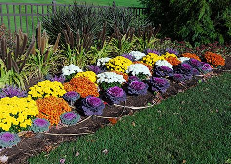 Annuals For Planters by Fall Flowers Annuals For The South Garden Club