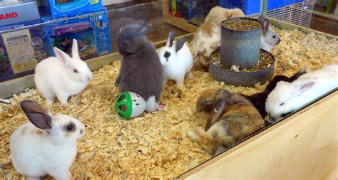 pet shops with puppies near me pet supplies for sale buy pet supplies at autos post