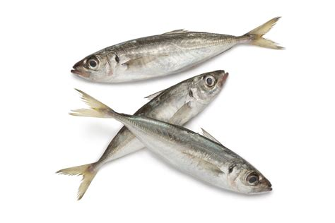 products frozen fish export  africa