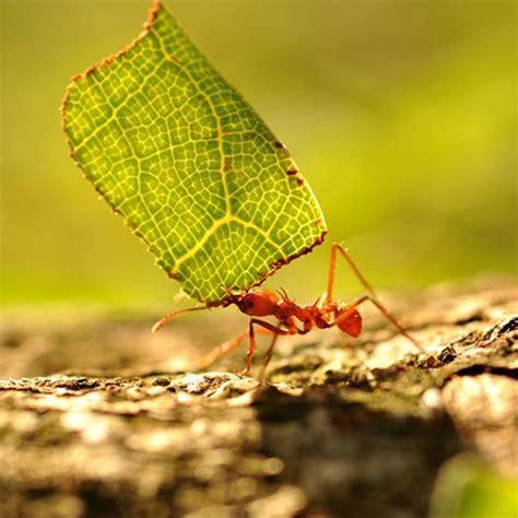 formiche in casa cosa fare rimedi contro le formiche nell orto e in casa come fare orto