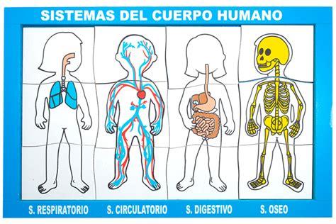 imagenes impresionantes del cuerpo humano partes del esqueleto humano related keywords partes del