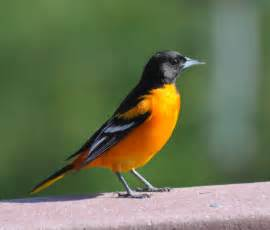 the land conservancy for southern chester county the bird