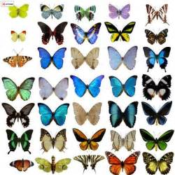 colors of butterflies species quot butterfly world quot