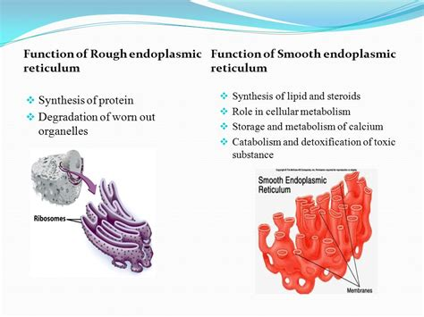 Smooth Endoplasmic Carcinogenic Detox by Cell Physiology By Dr Vani Gupta Ppt