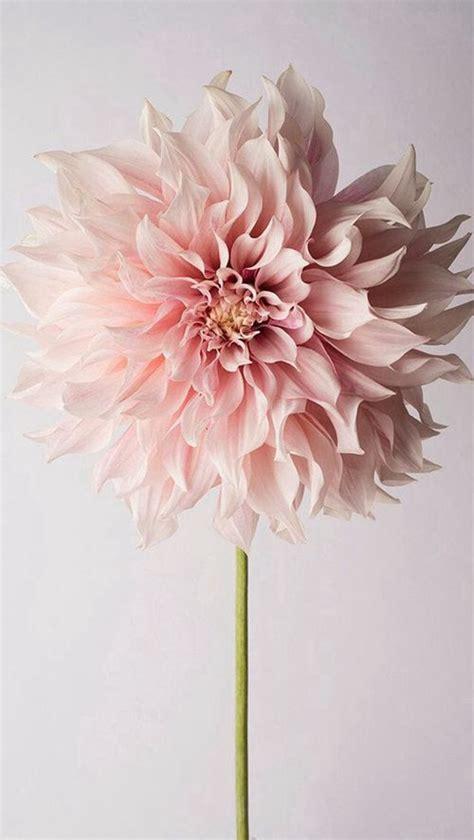 17 best ideas about november flower on pinterest 17 best ideas about single flower bouquet on pinterest
