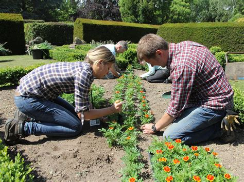 The Gardener by The Professional Gardener Level 2 Capel Manor College