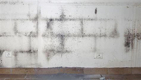 Schimmel An Der Wand Ursache 4377 by Schimmel Entfernen Dauerhaft Beseitigen Raum Analyse