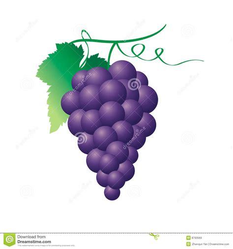 racimo de uvas corel uva imagens de stock royalty free imagem 8793569