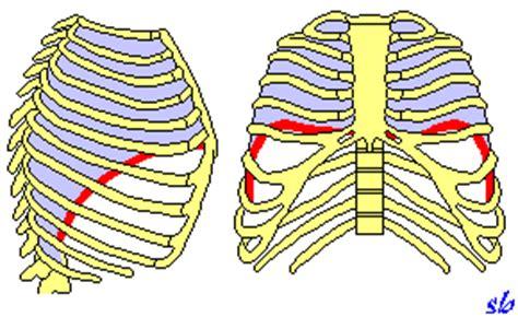 dolore gabbia toracica posteriore educazione respiratoria sport e medicina