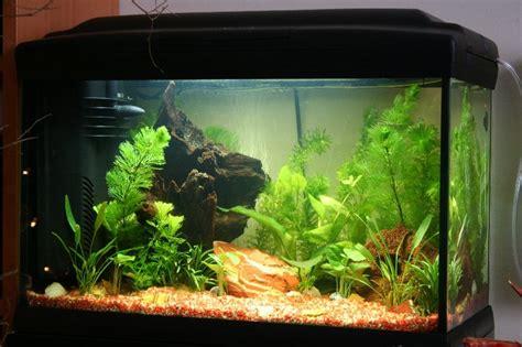 acquario casa come pulire l acquario soluzioni di casa