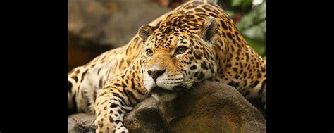 zoologischer garten guadeloupe zoologischer und botanischer garten les mamelles