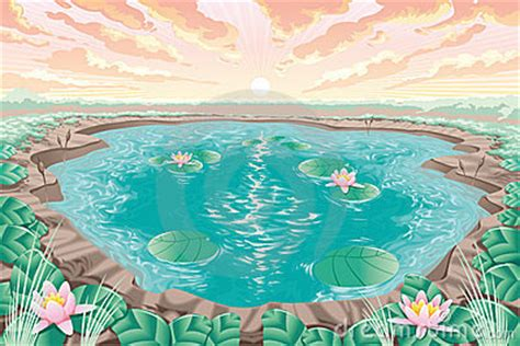 cartoon pond  lotus stock photo image