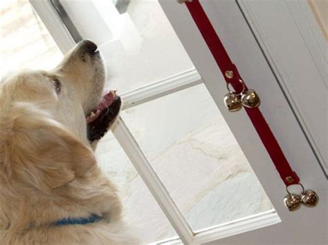how to train dog to ring bell for bathroom 80 best images about dog gadgets care apparel on
