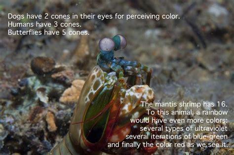 mantis shrimp colors a bugged