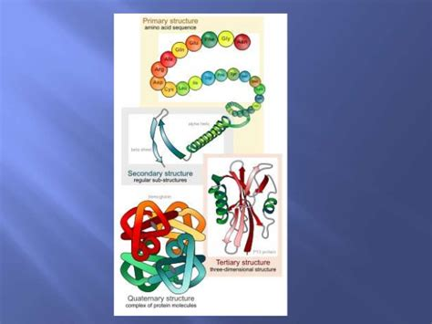 2 carbohydrates in living organisms new exles of proteins found in living organisms exle