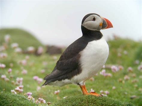bird flower and fish puffin