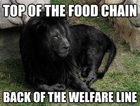 Buy All The Food Meme - goes hunting for food gets pulled over black lion