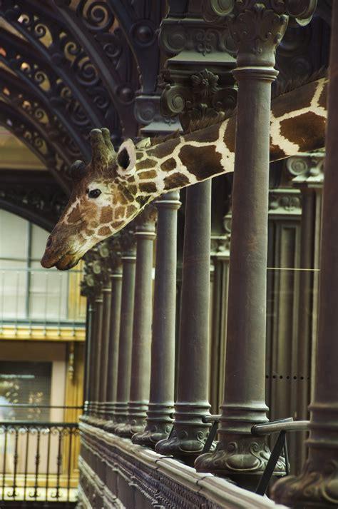 museum national dhistoire naturelle paris france