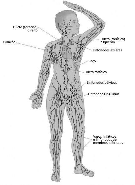 Linfonodos e câncer   Linfatica, Linfonodos, Estetica