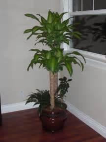 pretty indoor plants pretty pot plants rseapt org