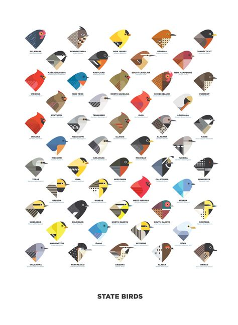 state birds state birds digital illustration art print by gregcircanow