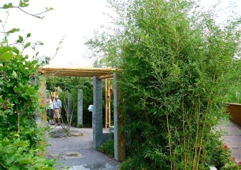 sichtschutz pflanzen schmal bambus