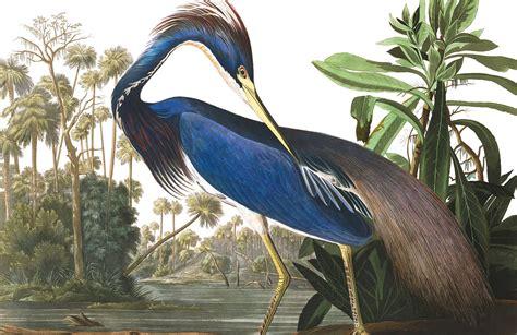 blue heron wallpaper mural murals wallpaper