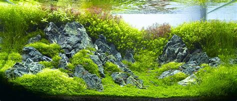 takashi amano aquascaping techniques aquascaping 250 žasn 253 obraz pr 237 rody v akv 225 riu akvaristika