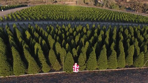 peltzer pines 2016 choose and cut christmas tree farms
