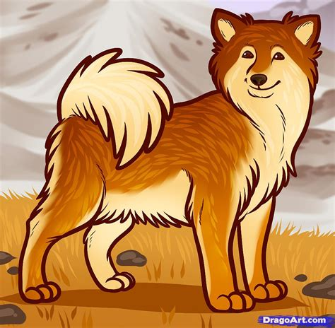 how to draw an icelandic sheepdog icelandic sheepdog
