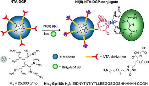 ni nta dendritic glycopolymers based on dendritic polyamine