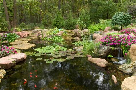 aquascape ecosystem pond supplies aquascape products live pond fish aquatic plants