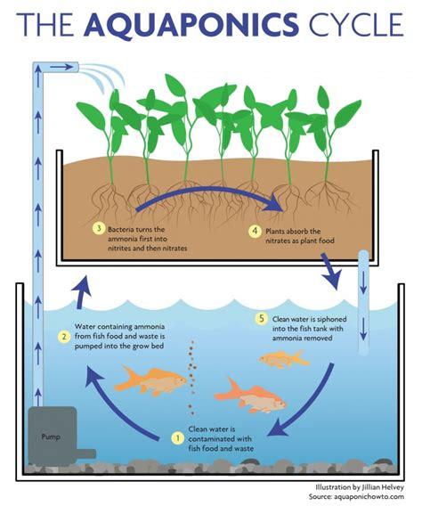 aquaponics diagram aquaponics in education green living