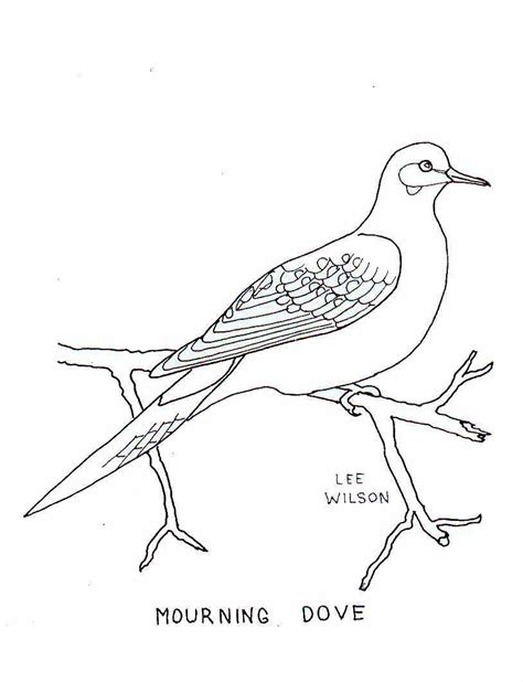 coloring pages dove bird mourning dove coloring page grig3 org