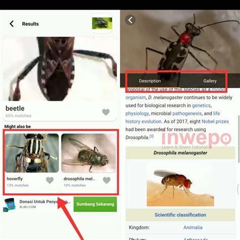 mengidentifikasi serangga  hp android inwepo