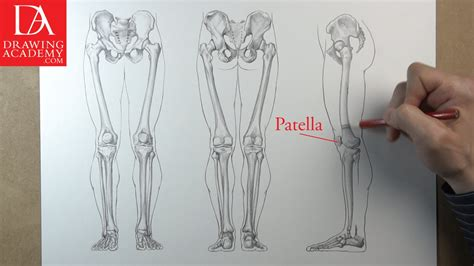 leg bones video lesson presented in the drawing academy