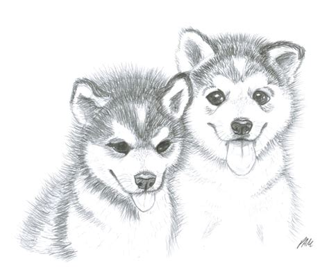 how to a husky puppy image gallery husky puppy drawings